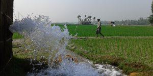 Irrigating rice fields in Sirajganj, Bangladesh.